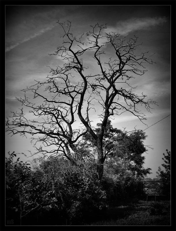 Tree, Moon Magic