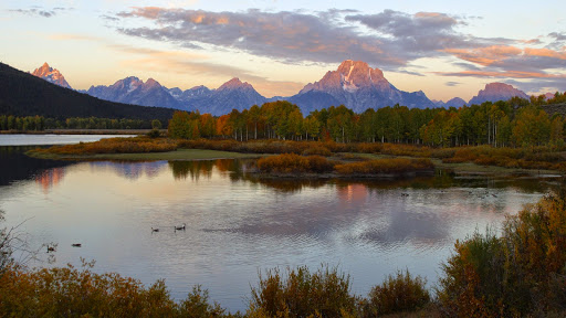 Canada Geese at Oxbow Bend, Snake River, Wyoming.jpg