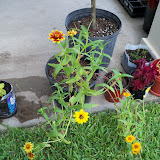 Gardening 2010, Part Three - 101_4909.JPG