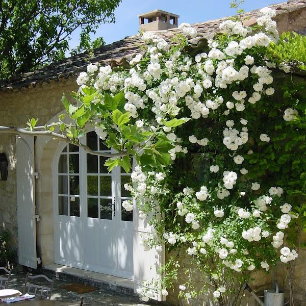 Photo number 19 of Les Vignes
