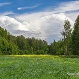 Полянка посреди леса
