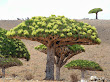 Socotra-islands-2