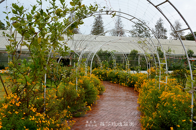 蘿莎玫瑰莊園大型溫室花園區域