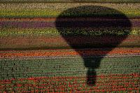 D_G_A_HenschelV_Our Shadow.jpg