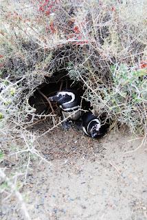 Biologistes_et_pingouins_4