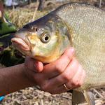 20140323_Fishing_Netishyn_027.jpg