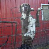 Jasper @ 2 1/2 years on 11/3/2012