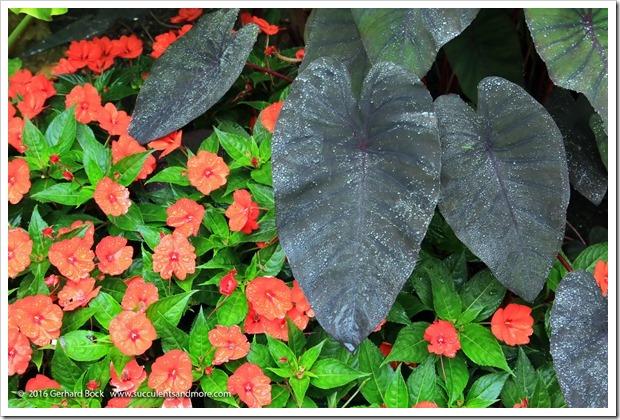160906_Butchart_Gardens_0017