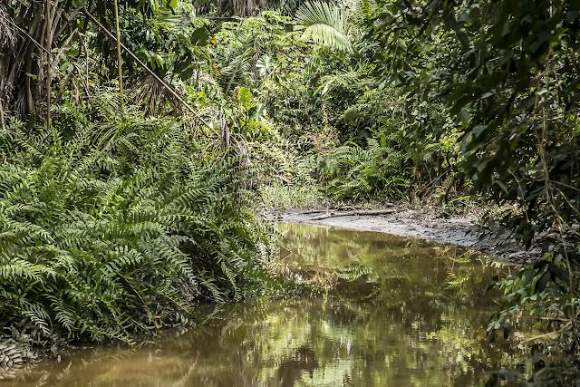 Forêt galerie. Fundo Palmarito, 265 m (Casanare, Colombie), 8 novembre 2015. Photo : B. Lalanne-Cassou