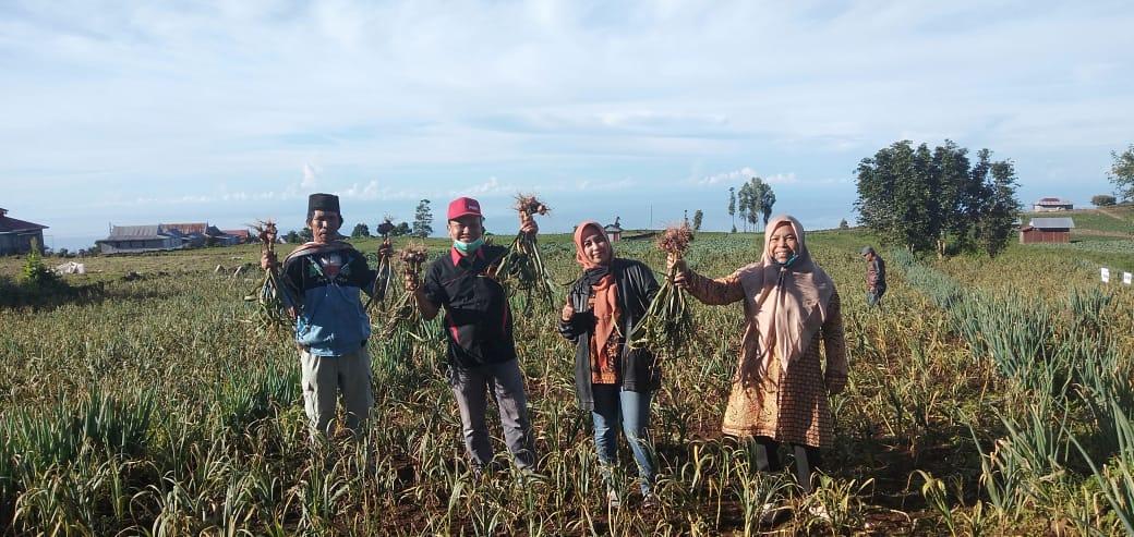 Panen Bawang Putih Kelompok Tani Berdasi di Bantaeng Didampingi Kostratani