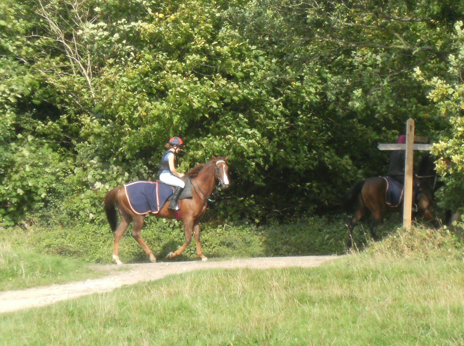 1009220023 Exercising racehorses on Walton Downs