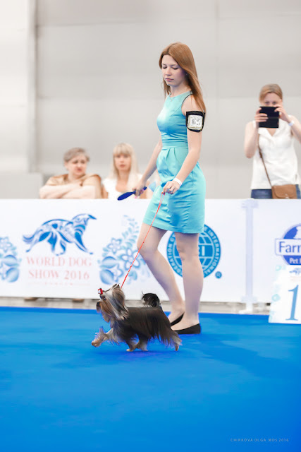 World Dog Show-2016 0065