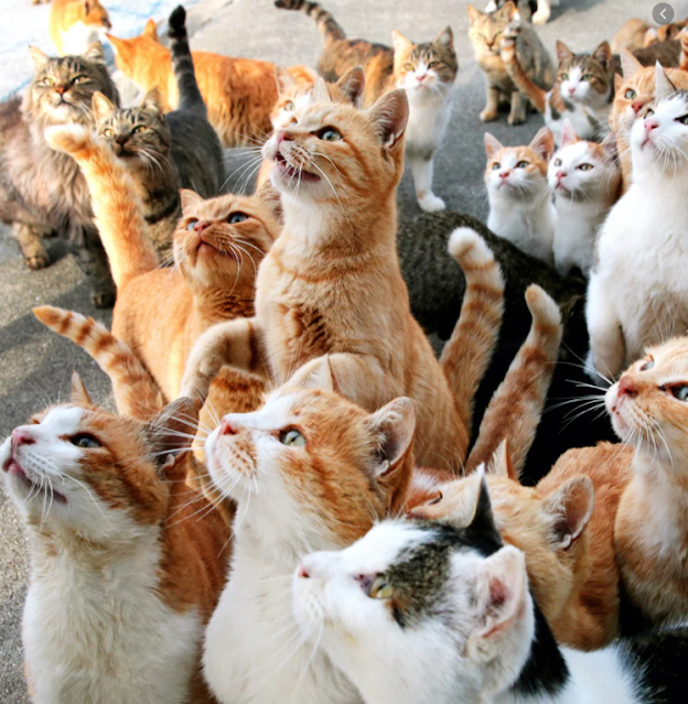App that understand cat voice