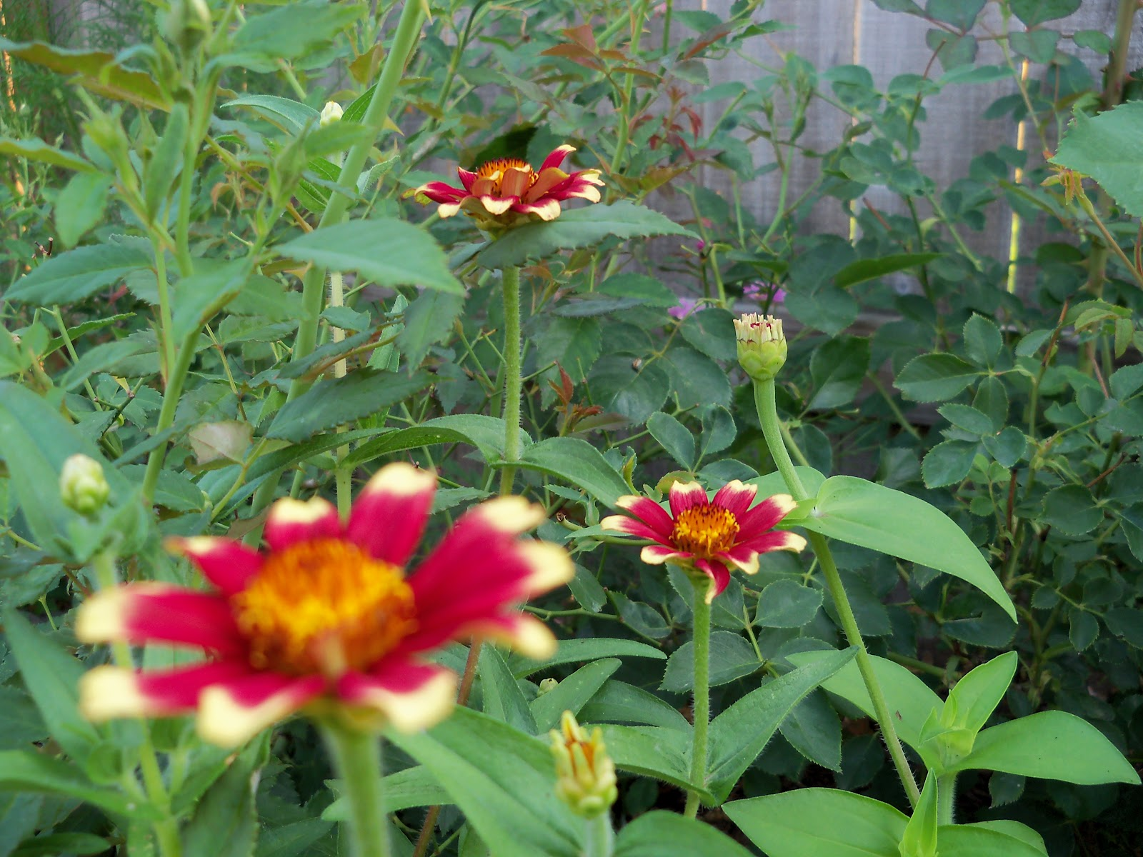 Gardening 2010, Part Two - 101_2998.JPG