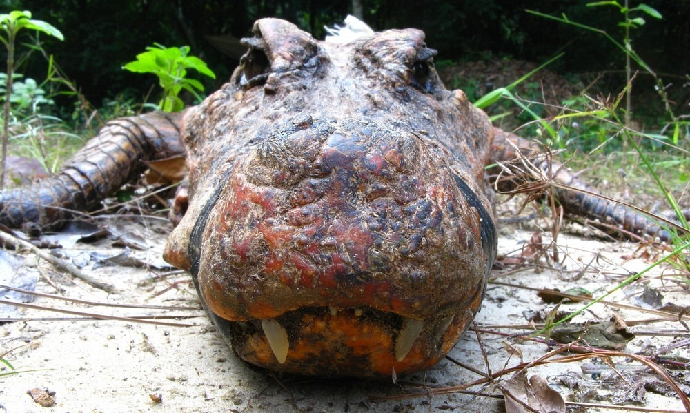 abanda-cave-crocodiles-1