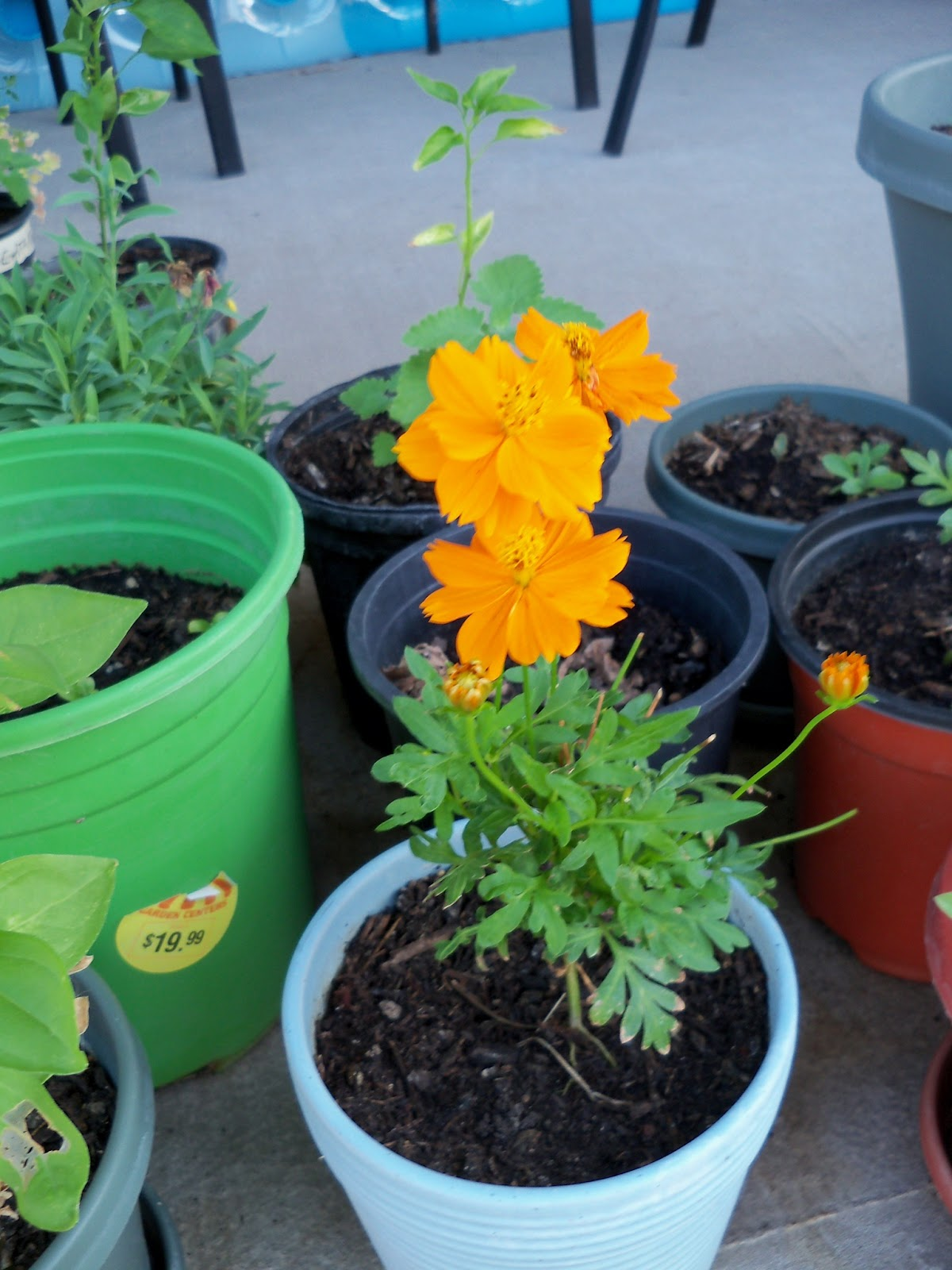 Gardening 2011 - 100_9260.JPG