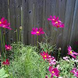 Gardening 2010, Part Three - 101_4398.JPG