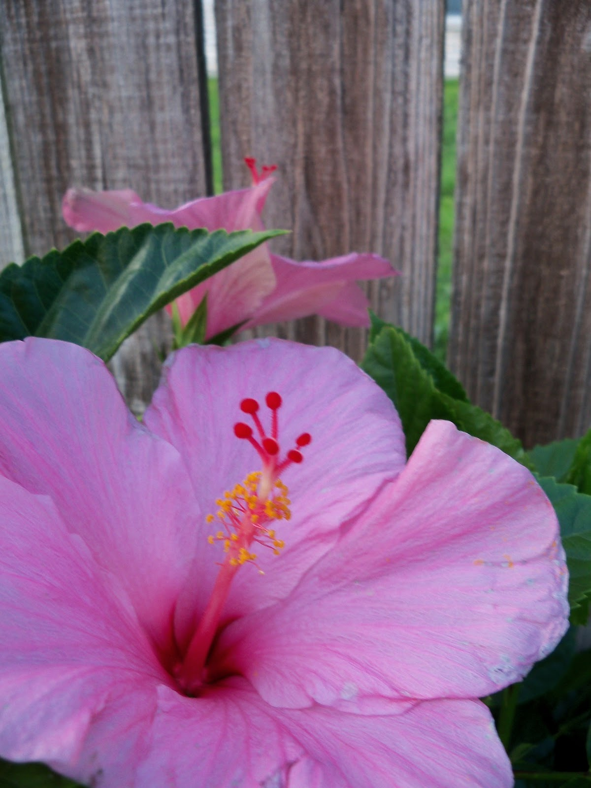Gardening 2012 - 115_2033.JPG