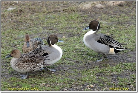 Slimbridge WWT - November