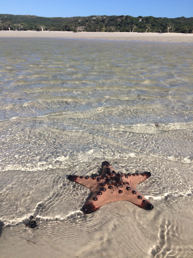 Just one of hundreds, maybe thousands, of Starfish on Elim Beach.
