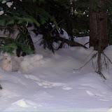 The original snow bunny.