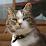 El Blog de Dolega's profile photo