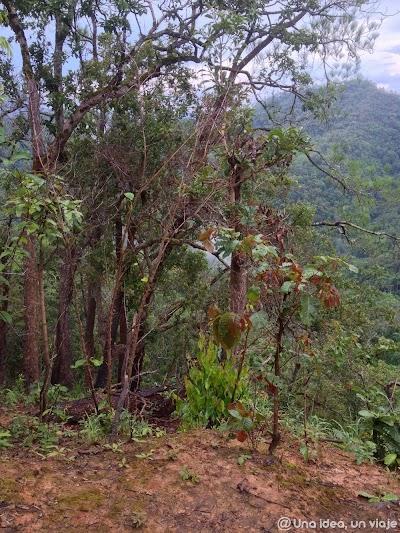 trekking-norte-tailandia-minorias-etnicas--unaideaunviaje.com-09.jpg