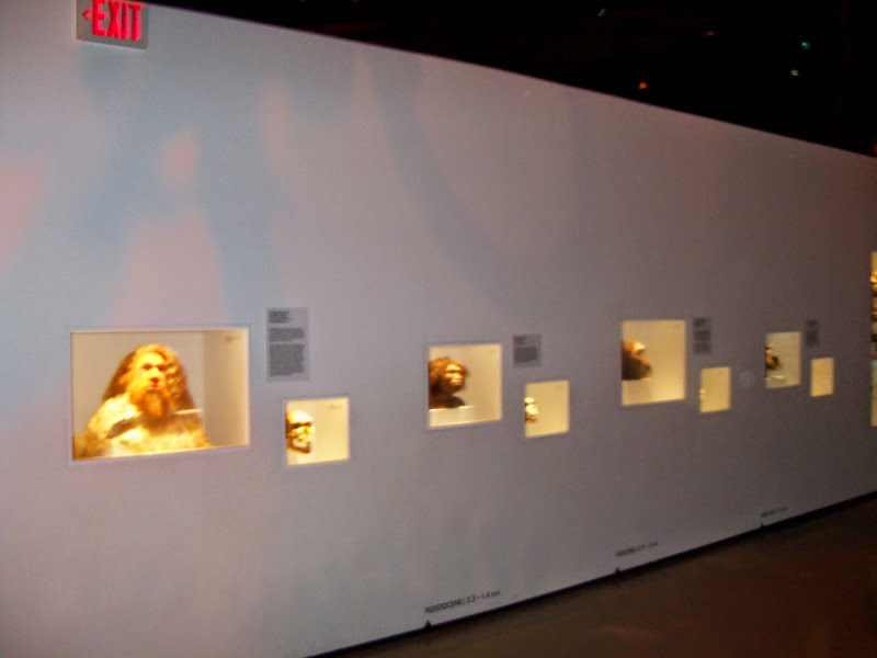 Houston Museum of Natural Science - 116_2689.JPG