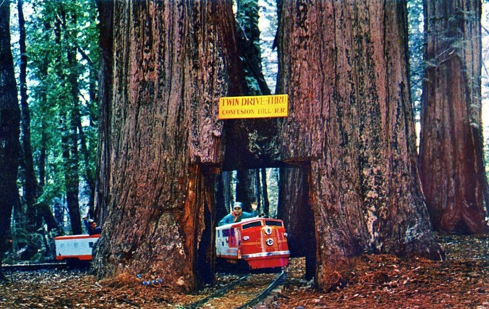 twin-drive-thru-tree-1