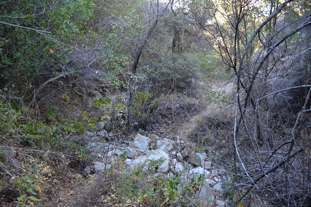 section of trail