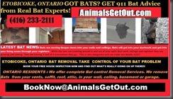 #EtobicokePestControl #Complete #BatRemoval Services (417)233-2111 AnimalsGetOut.com @AnimalsGetOut