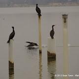 01-26-13 White Rock Lake - IMGP4292.JPG