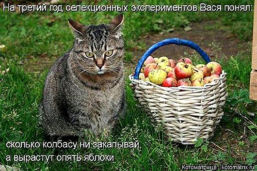 1439561517_kotomatrica-38