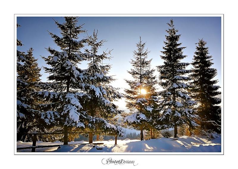 Photo-Dream__186 copy