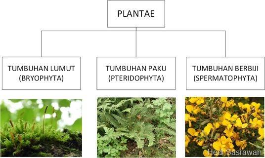 Klasifikasi kingdom plantae