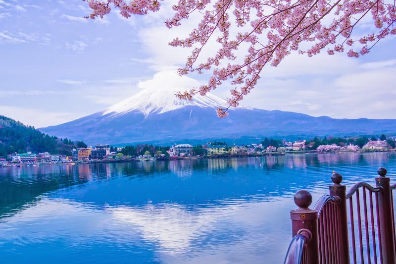 Lake kawaguchiko, cherry blossoms, Mt Fuji, Ubuyagasaki 4