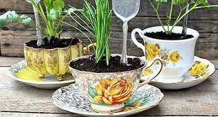 tanaman dalam cangkir kopi