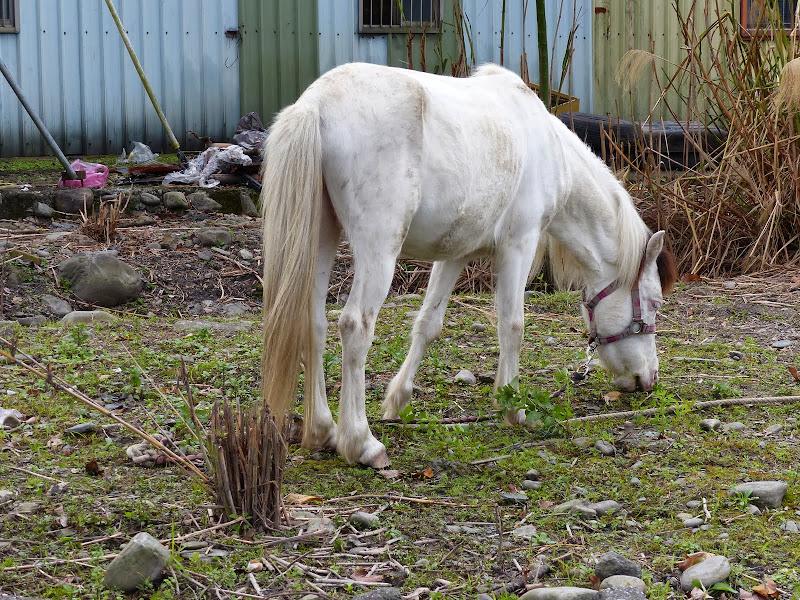 Yilan, pas courant de voir des chevaux
