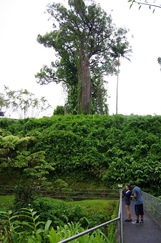 06-23-13 Big Island Waterfalls, Travel to Kauai - IMGP8882.JPG