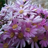 primavera-luminasioIMAG0215.jpg