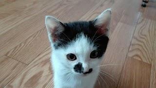 ケンカばかりの猫同士がとっても仲良くなる!すごい対策方法3