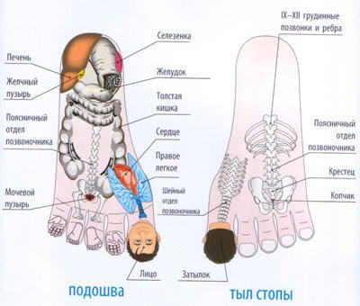 Основная система соответствия стопы