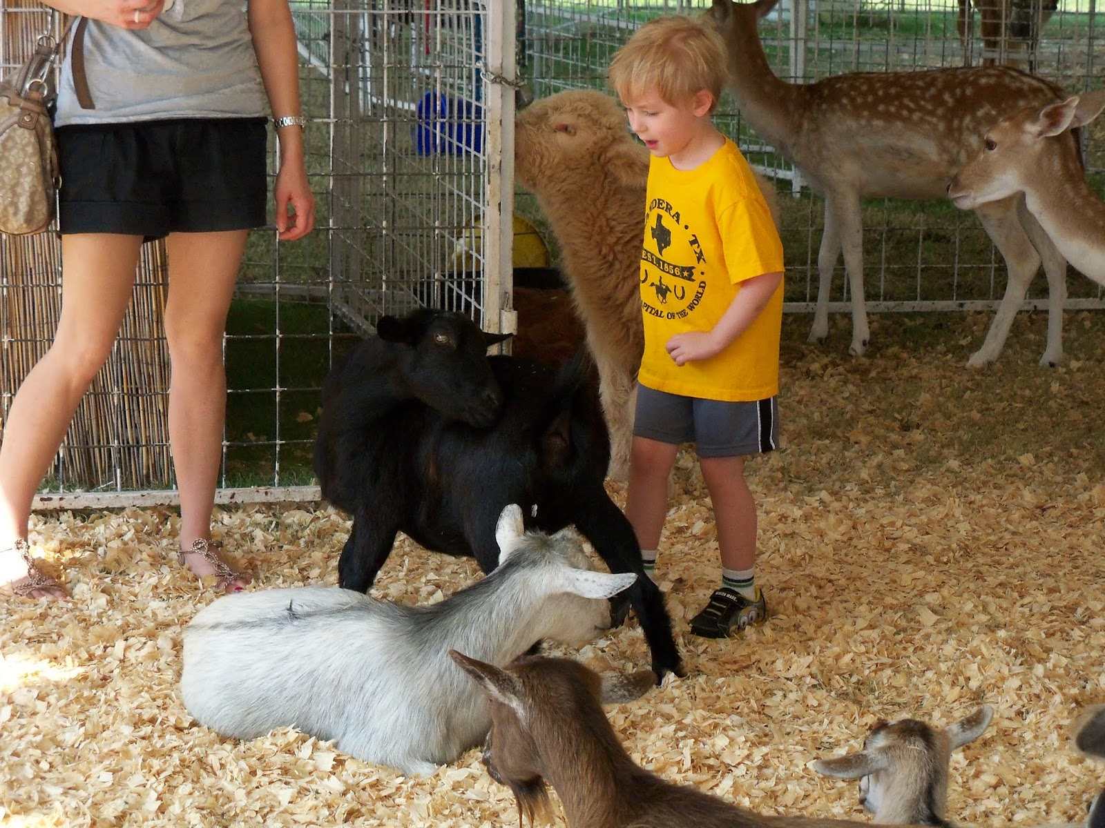 Fort Bend County Fair 2015 - 100_0171.JPG
