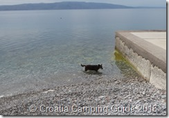 Croatia Camping Guide - Senj, dog swimming
