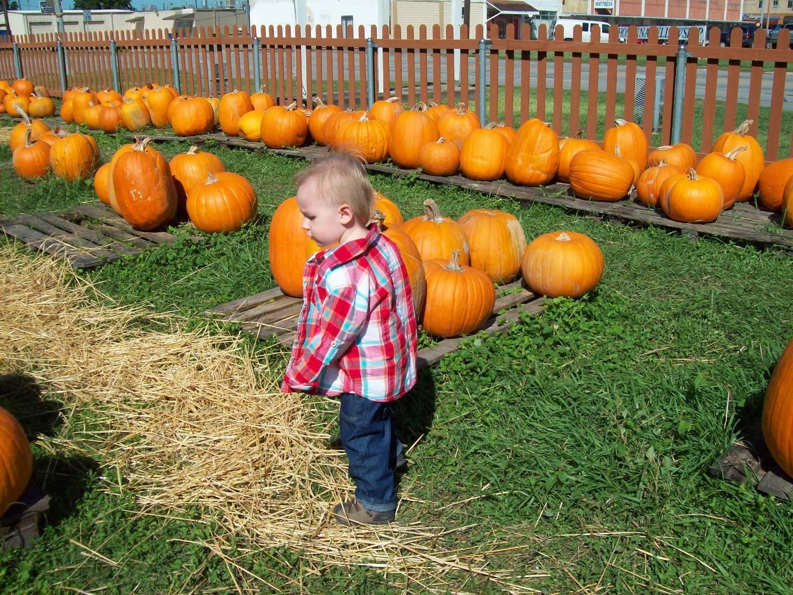 Pumpkin Patch - 114_6570.JPG