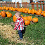 Pumpkin Patch - 114_6570.JPG