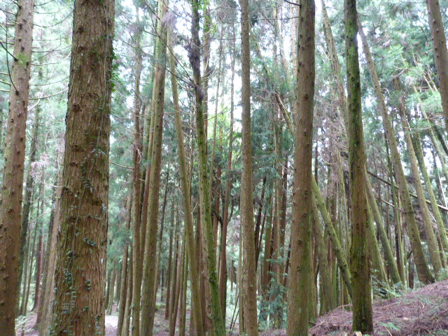 TAIWAN.Hsinchu et une minuscule partie du parc national de Sheipa, l empire du brouillard... - P1070848.JPG