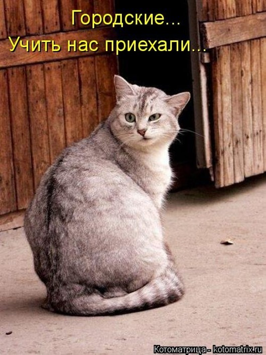 1481911510_kotomatrica-25