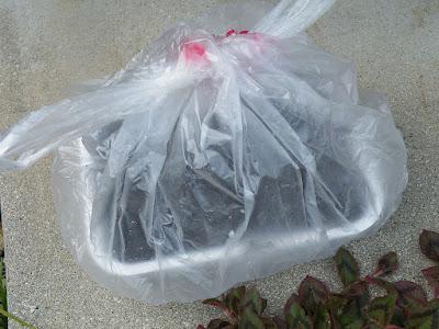 袋に入れて温室効果を狙う