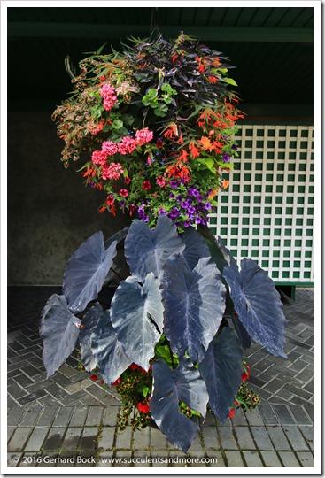 160906_Butchart_Gardens_0166